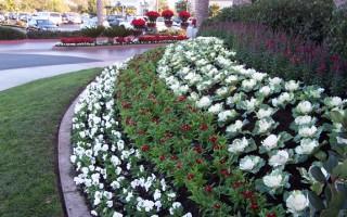 Landscape Installation by Western Gardens, Inc.
