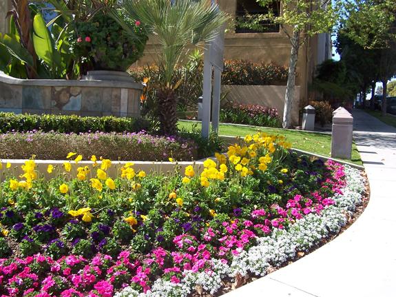 HOA Landscape Maintenance by Western Gardens
